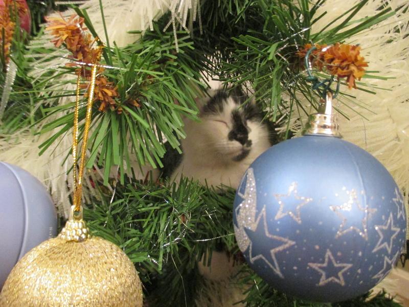 Roxy vous souhaite de joyeuses fêtes :-) II en images.... Img_2922