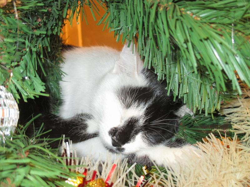 Roxy vous souhaite de joyeuses fêtes :-) II en images.... Img_2924