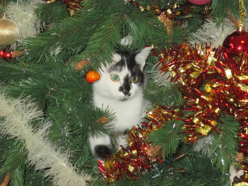 Roxy vous souhaite de joyeuses fêtes :-) II en images.... Img_2926