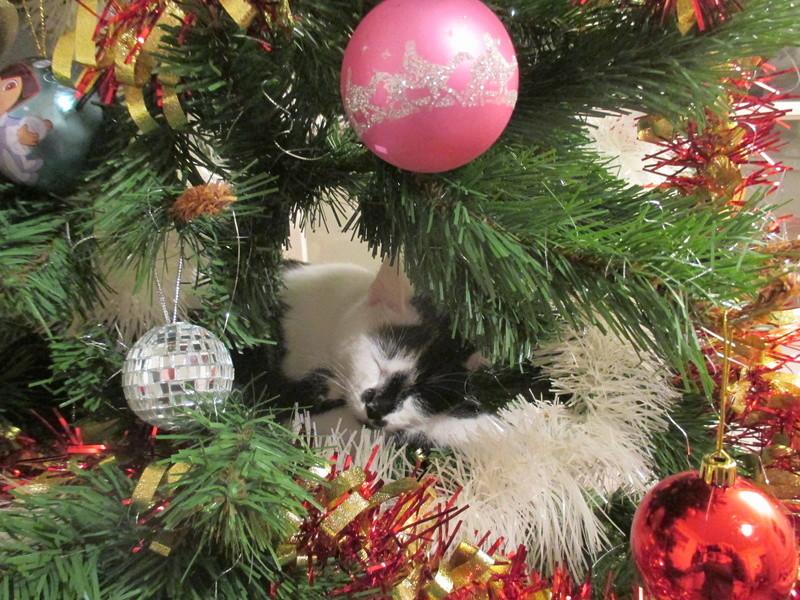 Roxy vous souhaite de joyeuses fêtes :-) II en images.... Img_2928