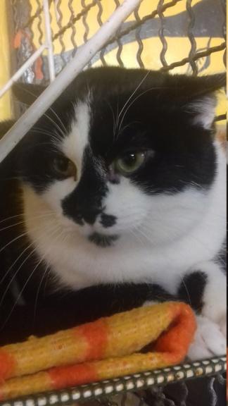 EITAN (chaton noir et blanc) 20210120