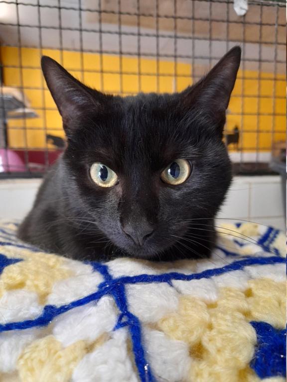 Boomerang  (magnifique chat noir!) 20210460