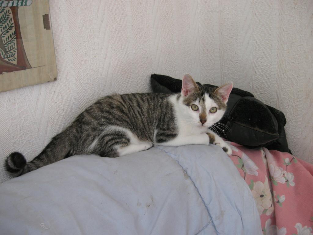 Perceval (chaton européen)  Img_1710