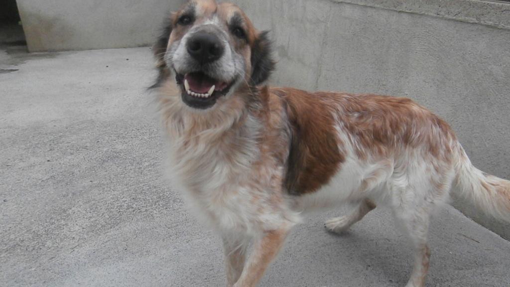 PANTOUFLE (chien croisé berger) P4069212