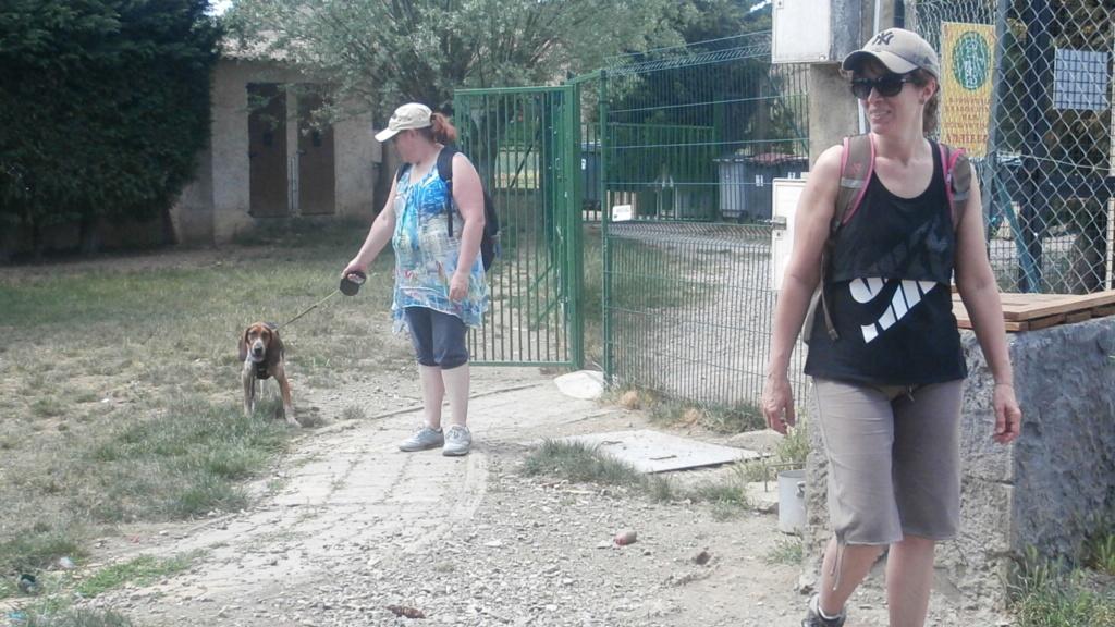 Randô chien 6 ème edition😊 P6029411