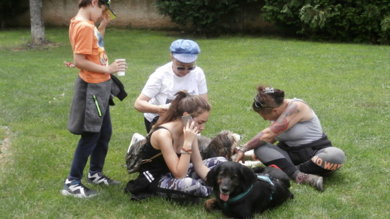 Rando chien 5 P6177619