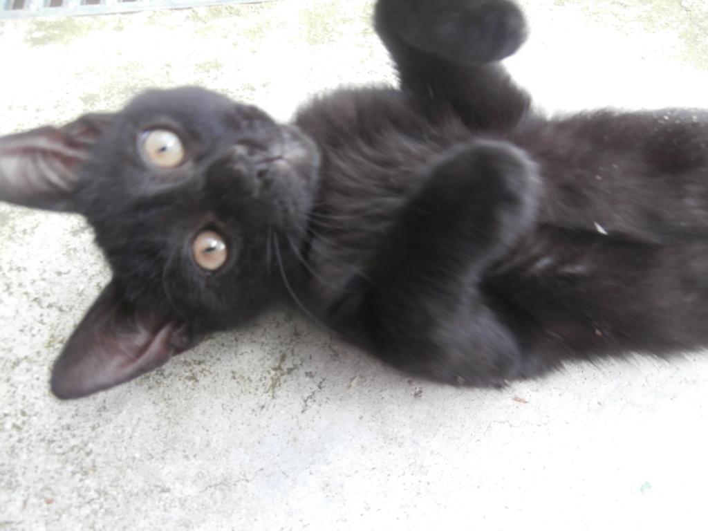 IMAM (chaton noir) P6209314