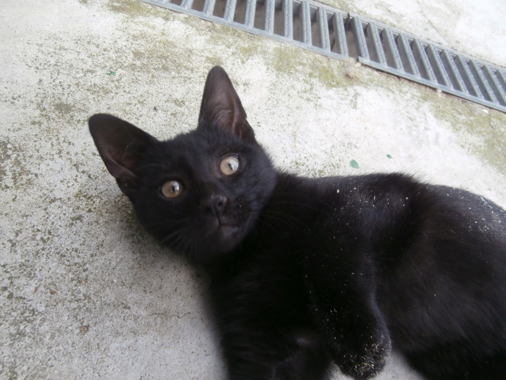 IMAM (chaton noir) P6209315