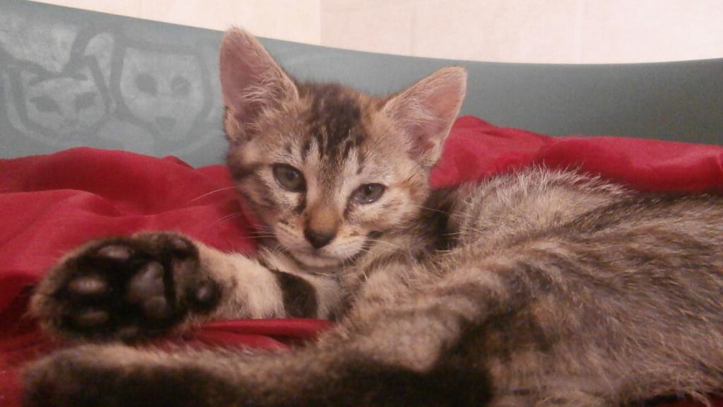 Friskies (chaton) P6268824