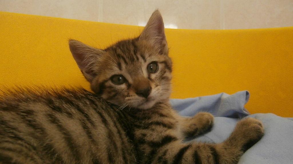 Friskies (chaton) P6268826