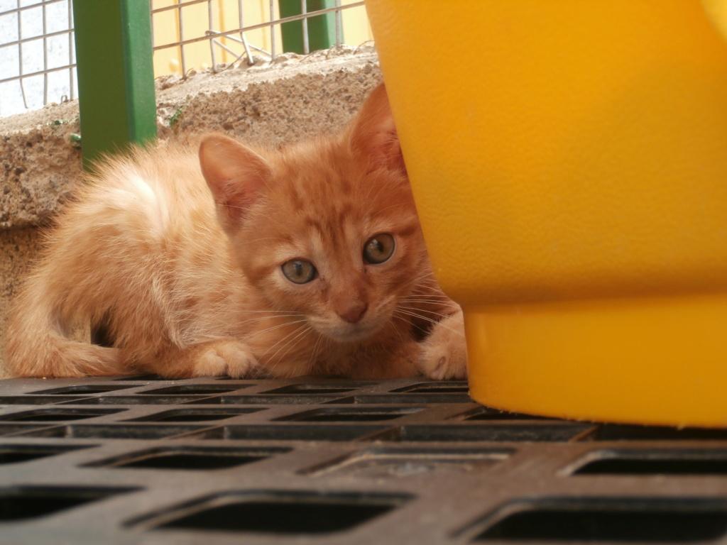 STITCH (chaton roux) P7069513