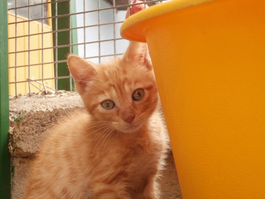 STITCH (chaton roux) P7069514