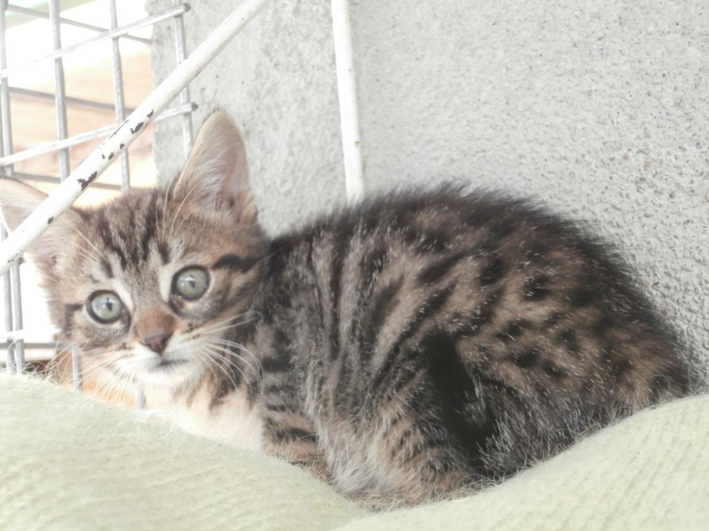 Zygna ( jeune femelle tigrée) P7079514