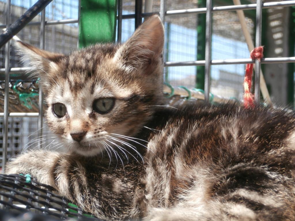 Zygna ( jeune femelle tigrée) P7079515