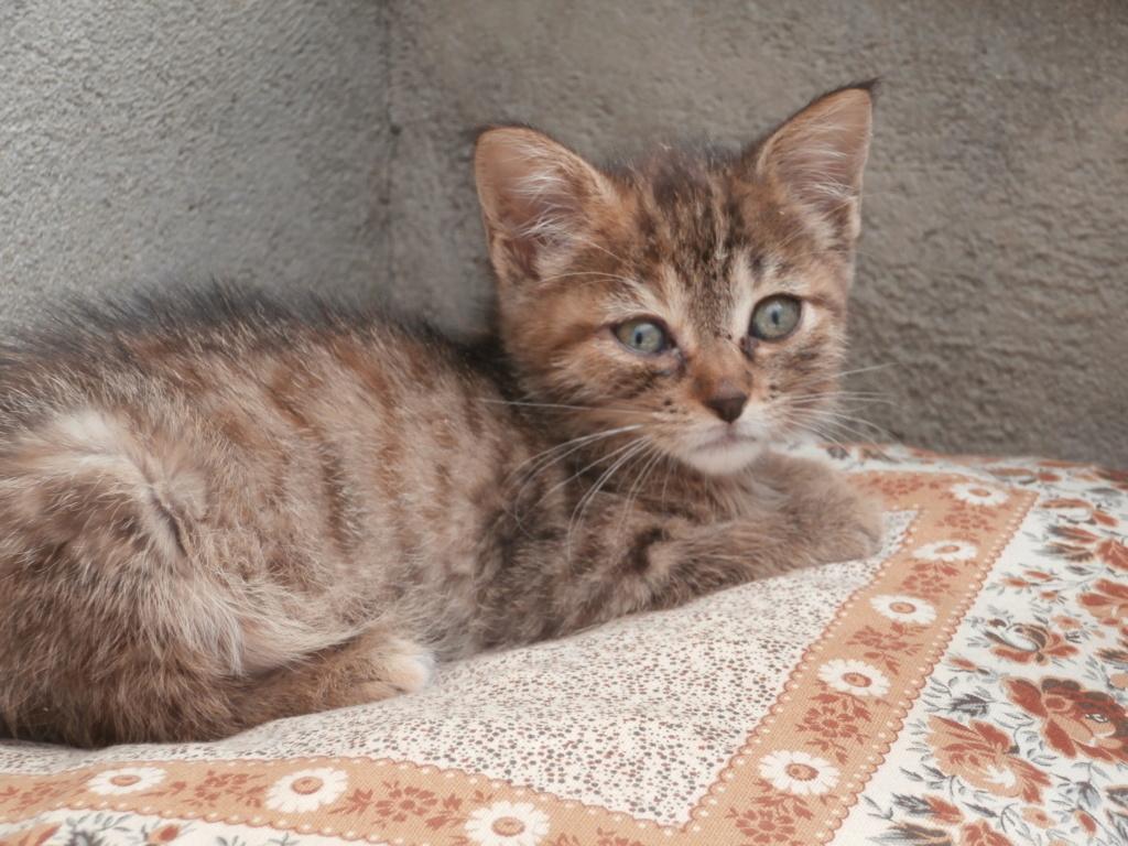 STITCH (chaton roux) P7079516