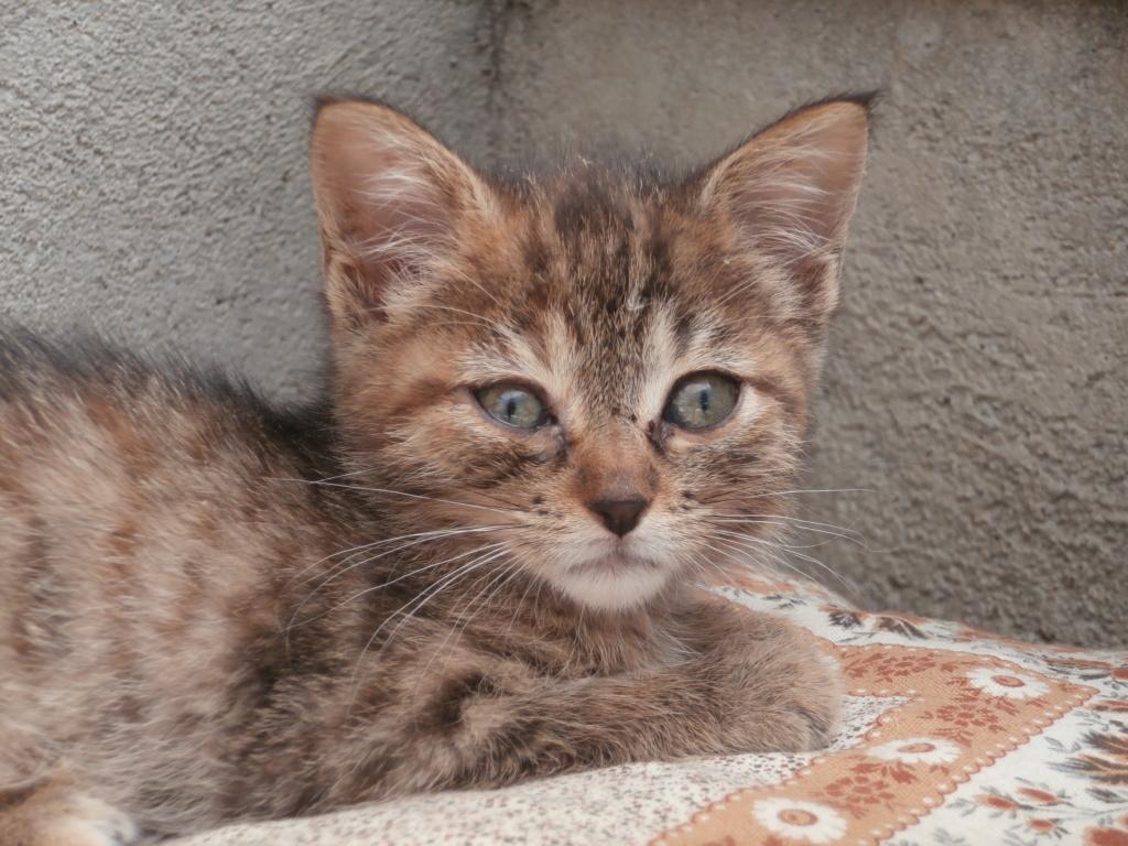 STITCH (chaton roux) P7079517