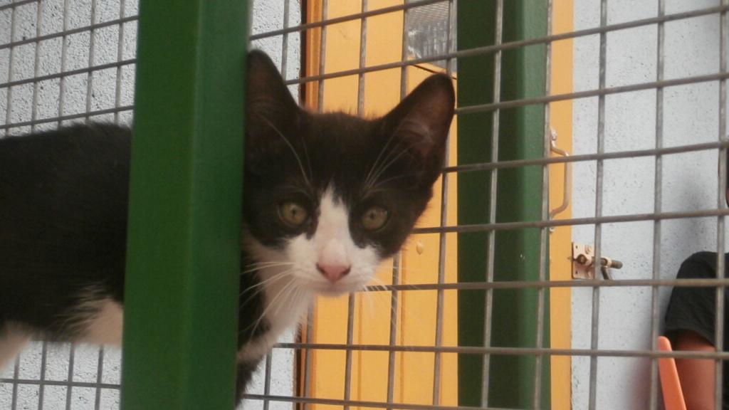 FRISKIES (chaton noir et blanc) P7209017