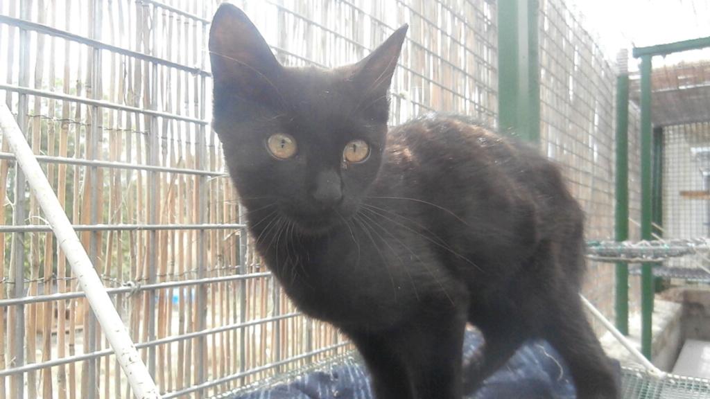 BAYA (chaton femelle noir) P8108860