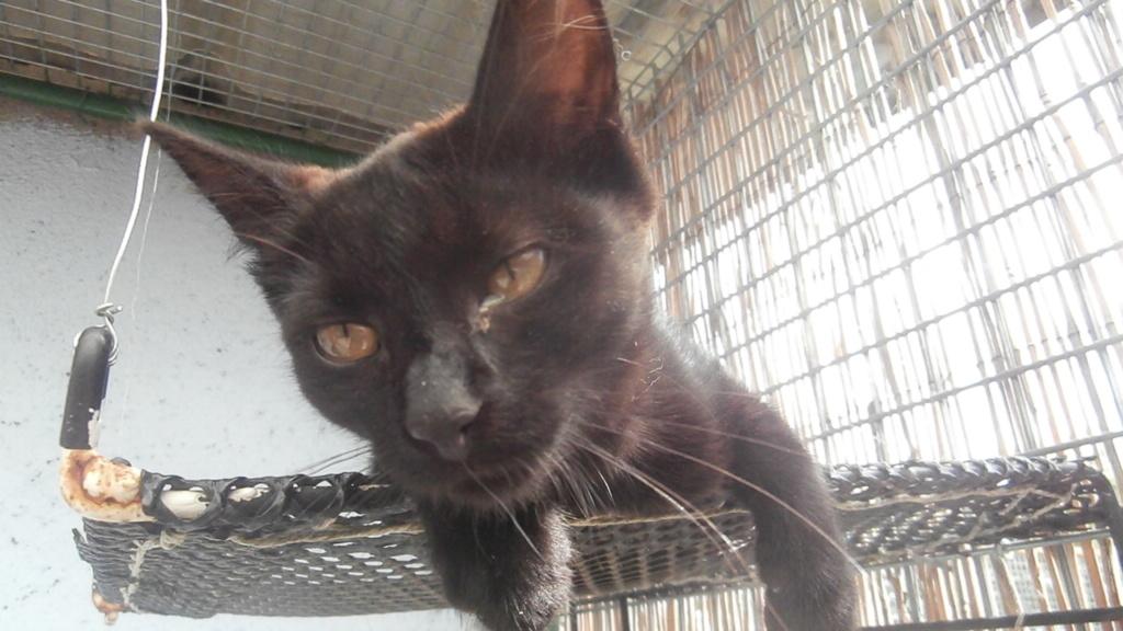 BAYA (chaton femelle noir) P8108862