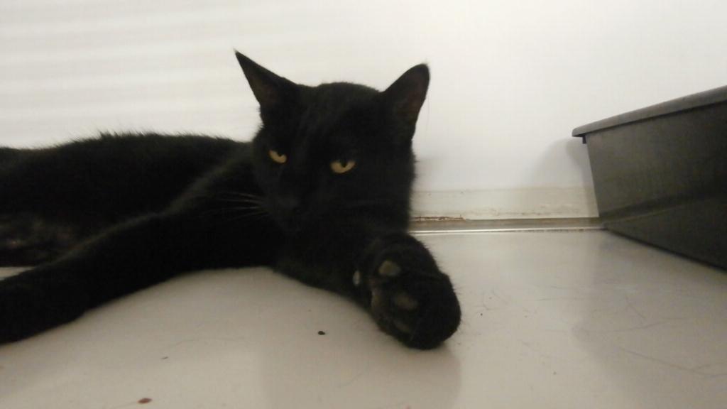 PACHA (européen noir) P8117928