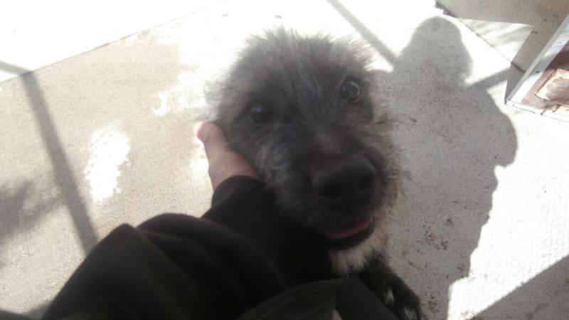 OSLO (chien mâle croisé berger) P9028111