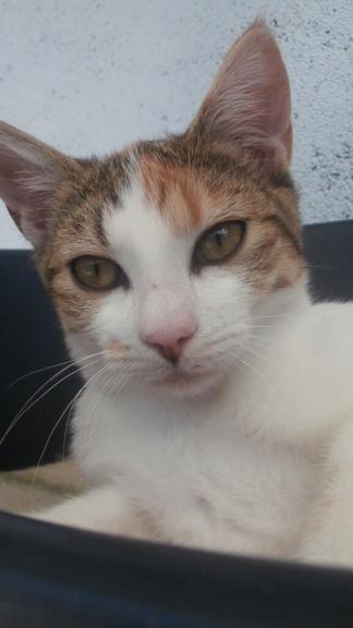 Sally (chaton tricolore) P9088310