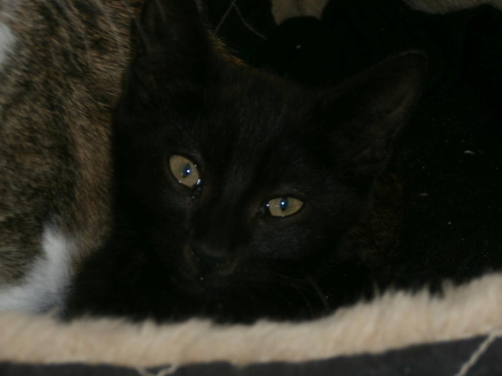 KIKI (chaton noir) P9268812