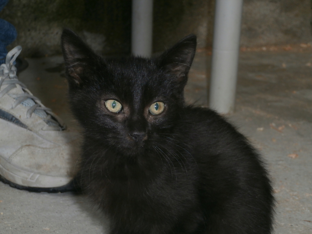 KIKI (chaton noir) P9268813