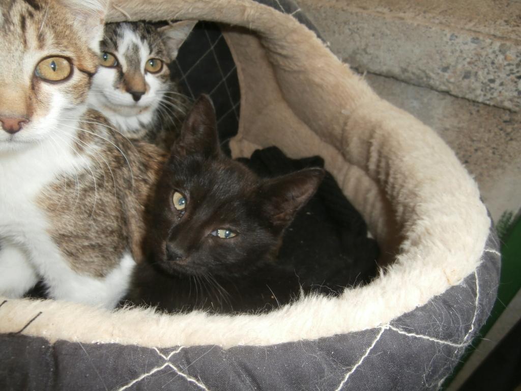 KIKI (chaton noir) P9268814