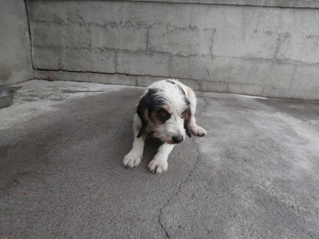 GUESS (chienne croisée griffon) Pa038910