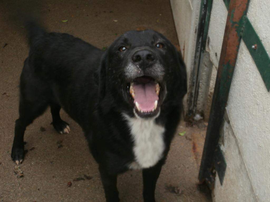 BISS (chien mâle croisé berger) Pa038917
