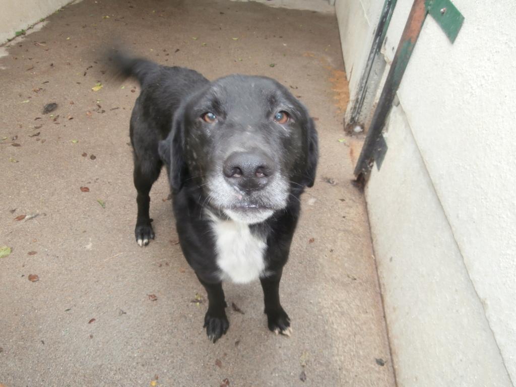 BISS (chien mâle croisé berger) Pa038918