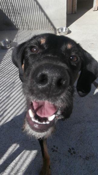 FALCO (chien croisé border) Pa068214