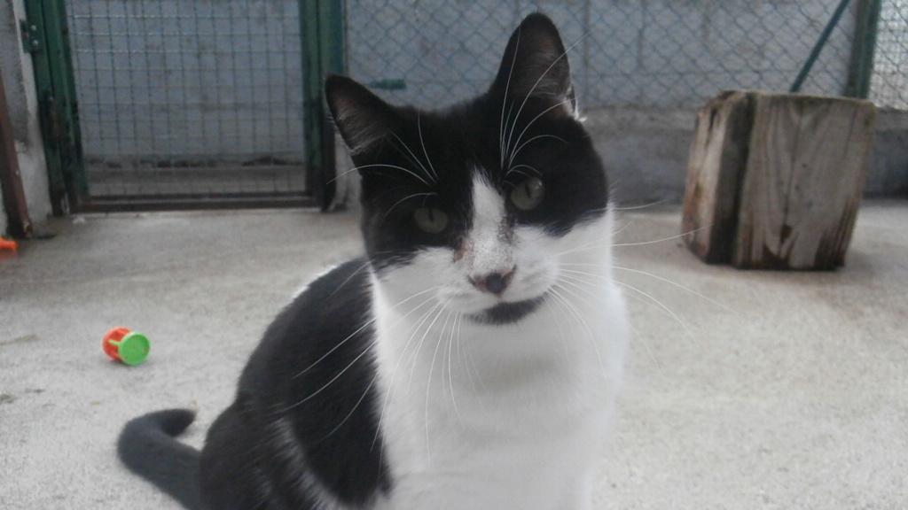 PEPITO (européen noir et blanc) Pa078433