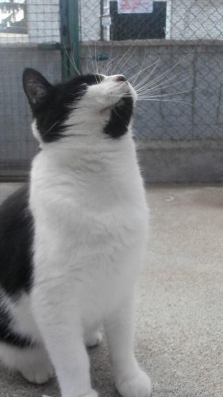 PEPITO (européen noir et blanc) Pa078434