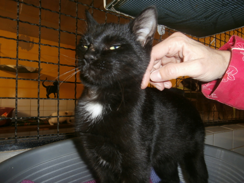 CRAPAUD (chat jeune noir) RÉSERVÉ  Pa148829
