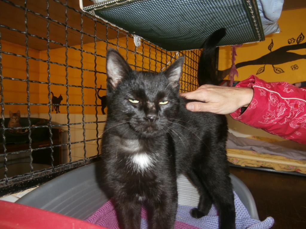 CRAPAUD (chat jeune noir) RÉSERVÉ  Pa148830