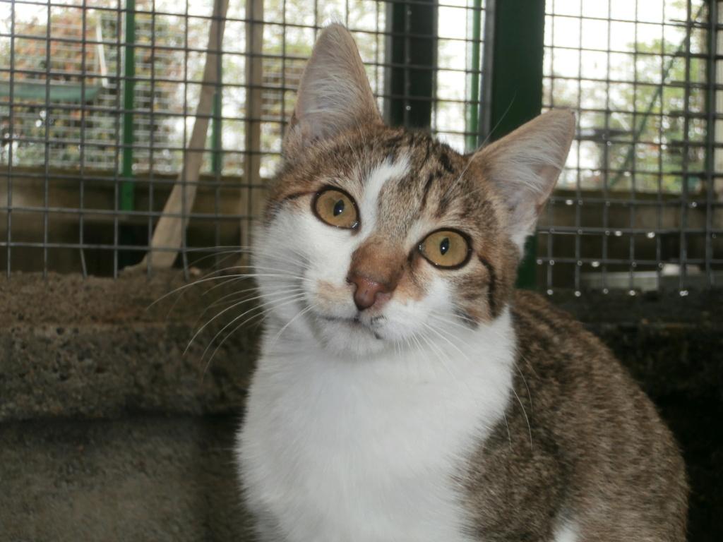 FOLIO et FISH (chatons tigrés et blancs) Pa148920