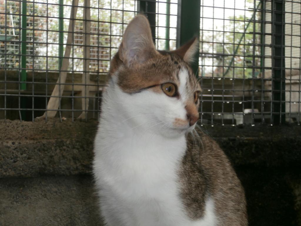 FOLIO et FISH (chatons tigrés et blancs) Pa148921