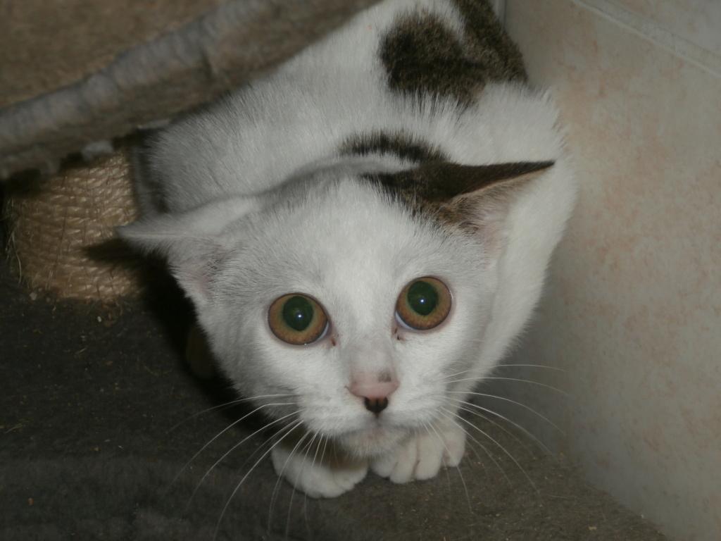 FOLIO et FISH (chatons tigrés et blancs) Pa148924