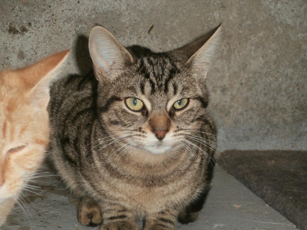 Zygna ( jeune femelle tigrée) Pa148958