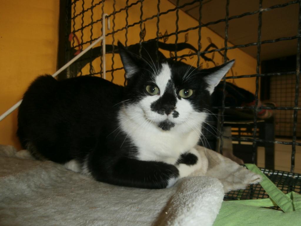 EITAN (chaton noir et blanc) Pa148962