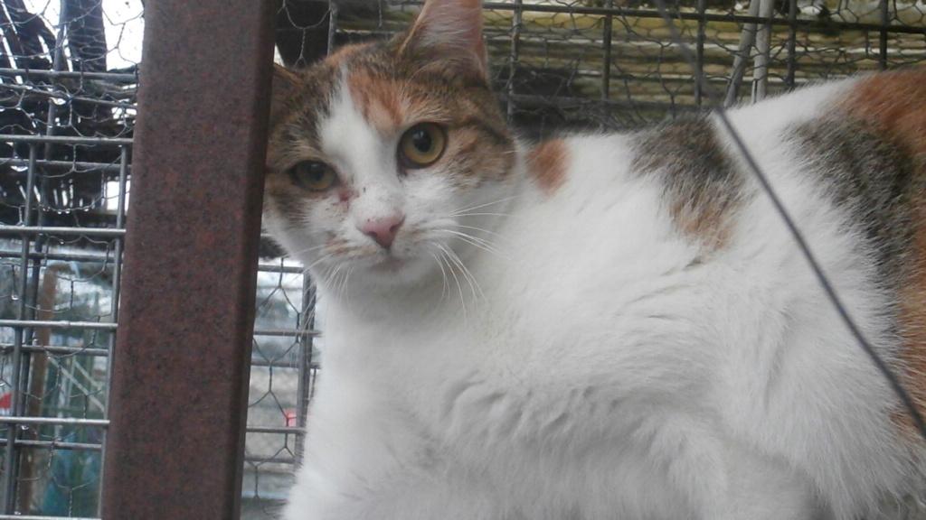 Sally (chaton tricolore) Pc158610