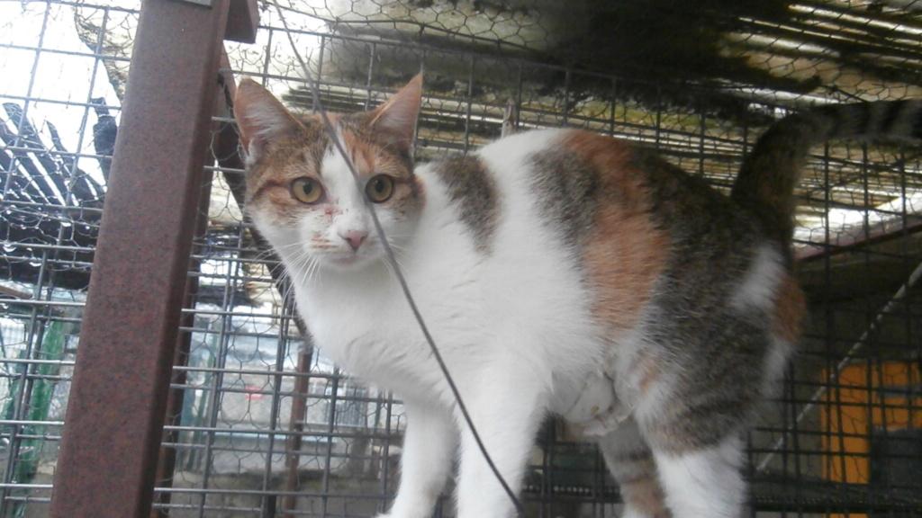 Sally (chaton tricolore) Pc158611