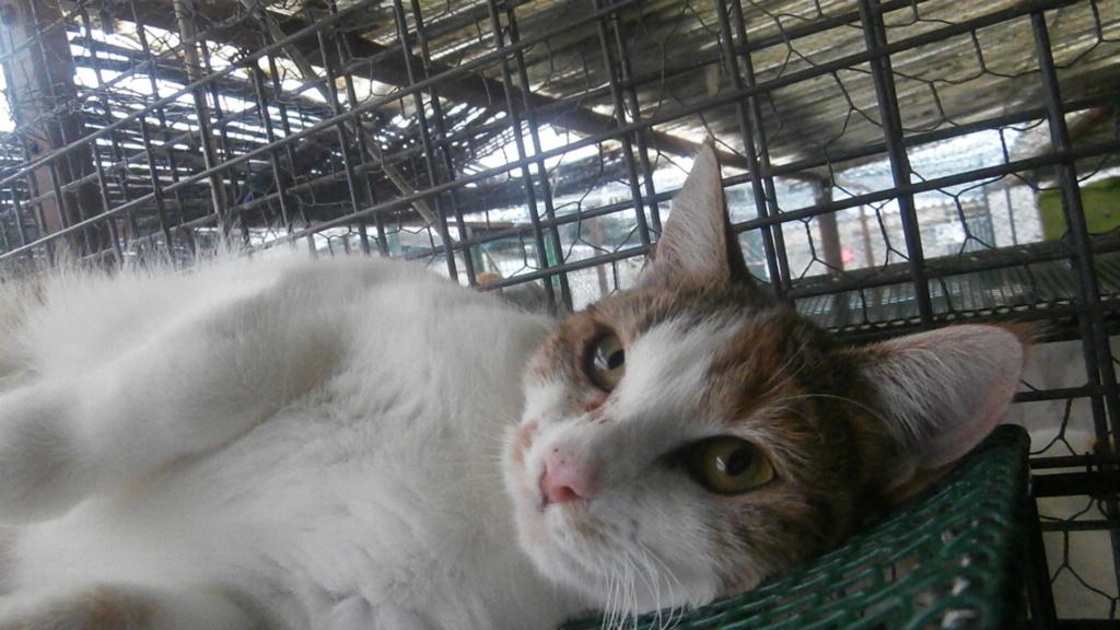 Sally (chaton tricolore) Pc158613