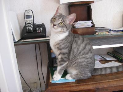 Perceval (chaton européen)  Thumbn11