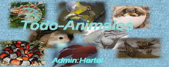 TODO-ANIMALES