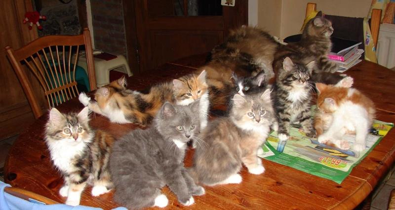 concours photos: le chat en groupe Troupe11