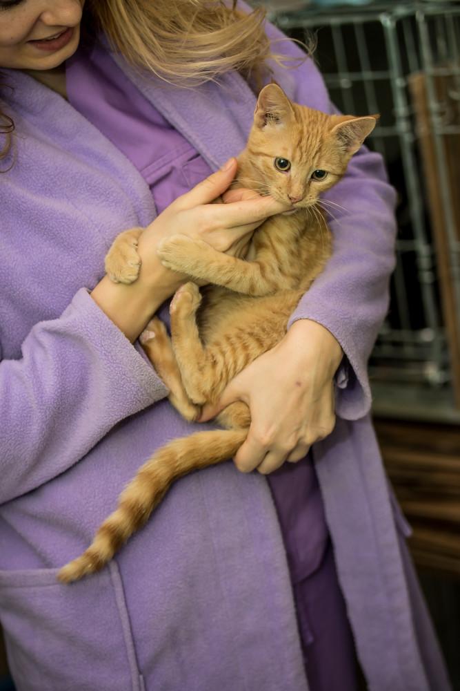 GINGER (Marley) - chat mâle né en septembre 2016 - CARMINA BUCAREST. Réservé adoption via une autre asso Ginger14