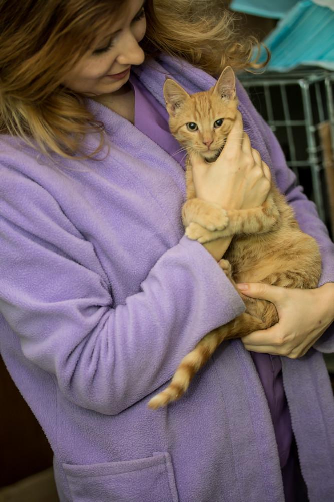 GINGER (Marley) - chat mâle né en septembre 2016 - CARMINA BUCAREST. Réservé adoption via une autre asso Ginger16